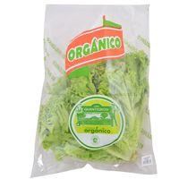 Lechuga-crespa-organica