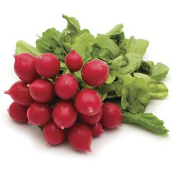 Rabanito-organico